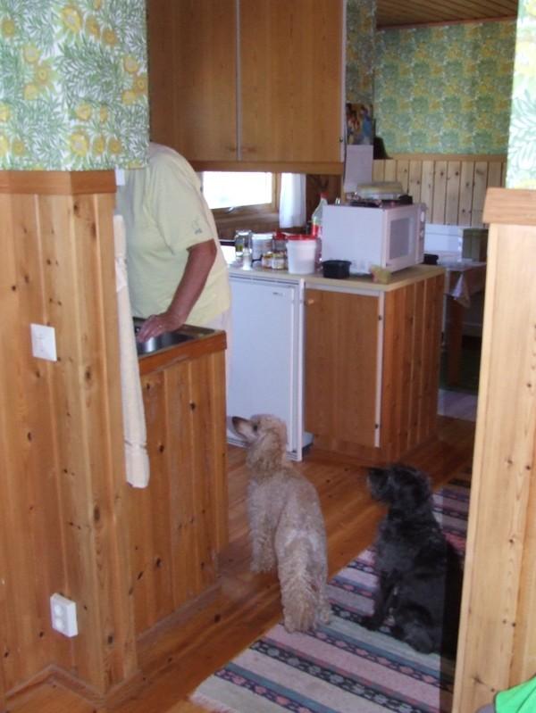 Gamla köket med sina släta furuluckor