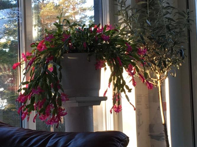 I full blom 18 december 2016