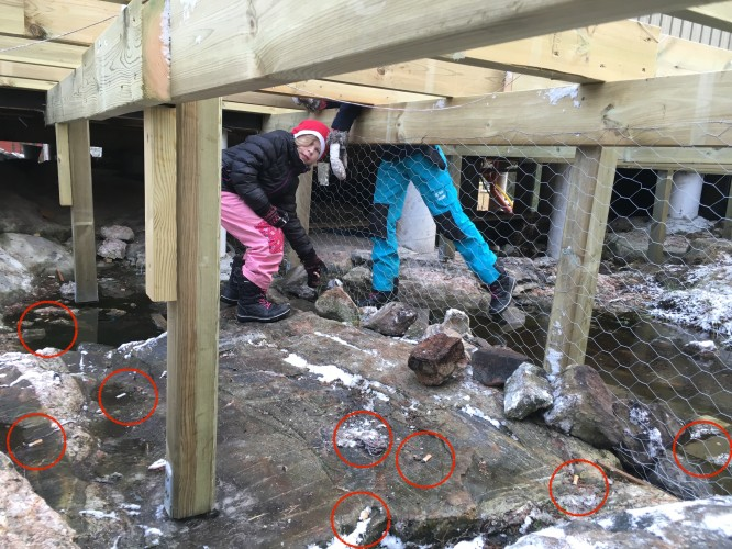 Fimpar samt ett långt snöre inringade. Och dessa har tillkommit bara under uppreglingen av altanen.
