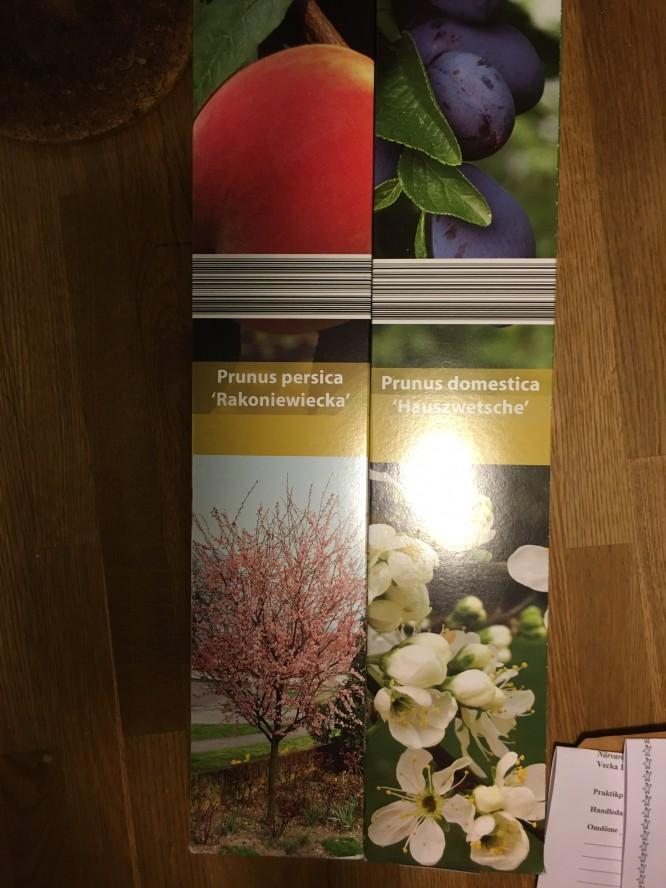 Persiko- och plommonträd från Lidl