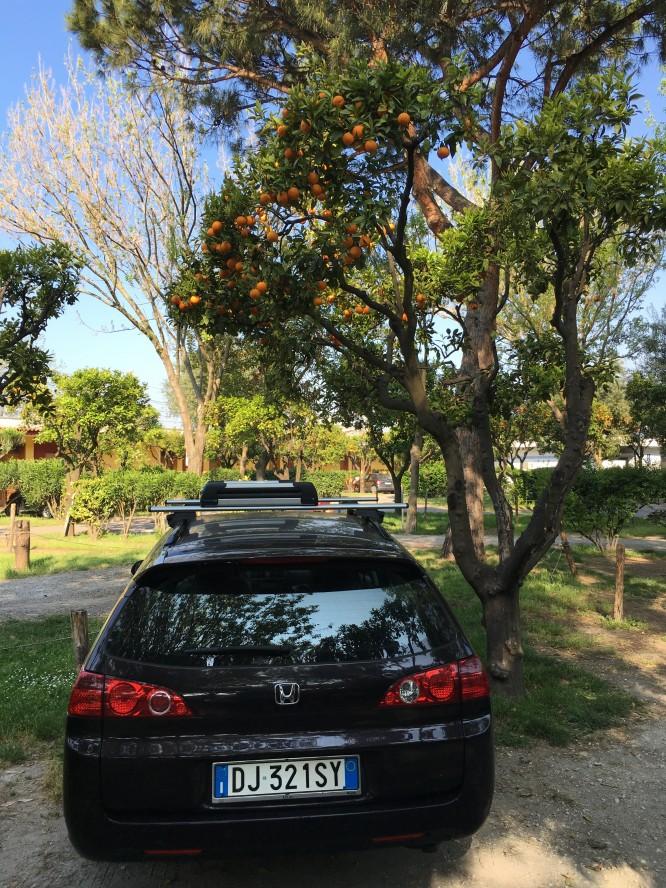 """""""Vår"""" bil parkerad under ett apelsinträd"""