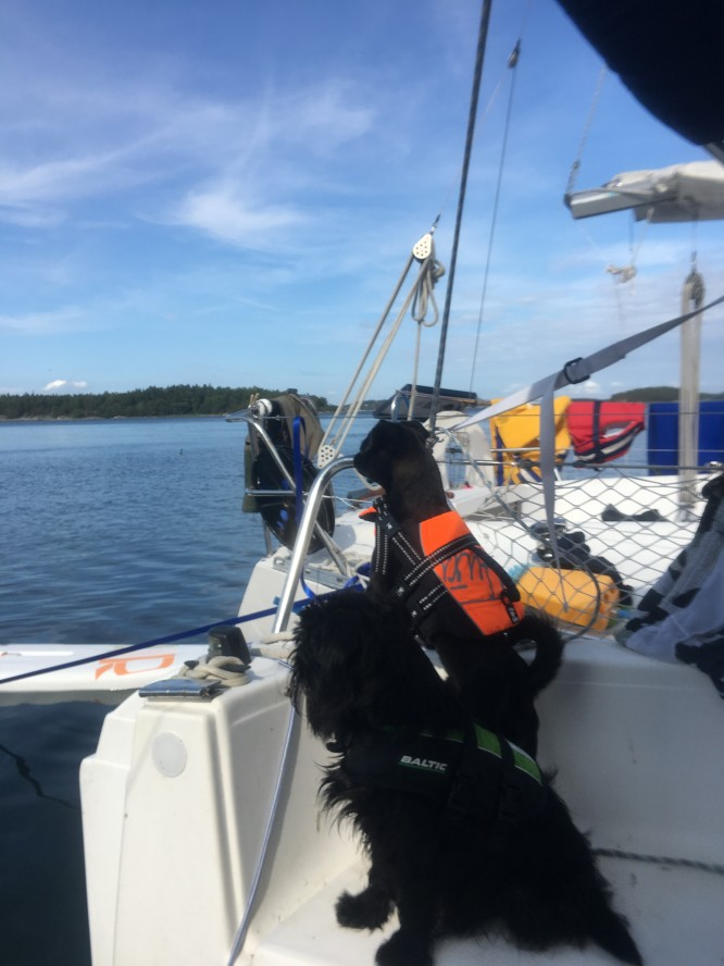Båda hundarna trivs ombord!