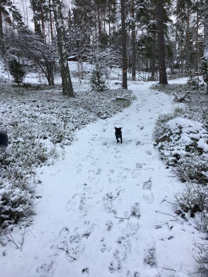En promenad i skogen