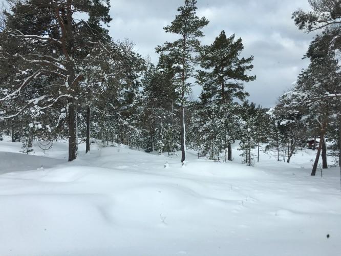 1 mars 2018, tomten under ett 4 dm djupt snötäcke. Under finns det vackra, det sköra...men just nu ser allt bara mjukt och orört ut.